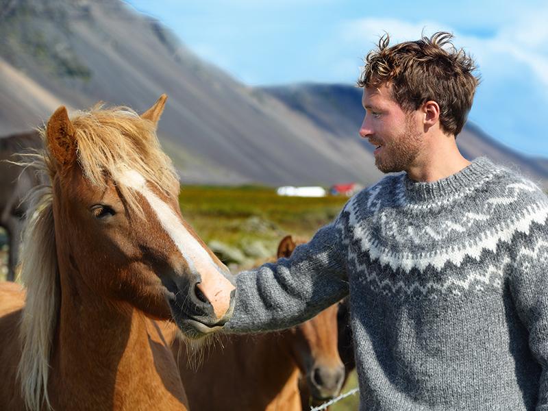 BilFERIE PÅ ISLAND_Komplett bilferie rundt Island_Vakre Islandshester